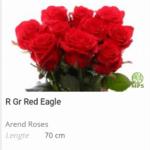 hollandse rozen groothandel