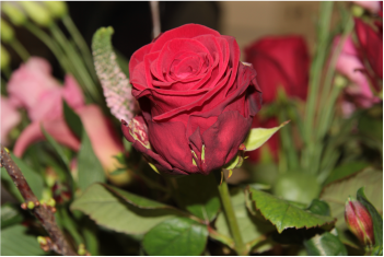 Valentijnsbloem