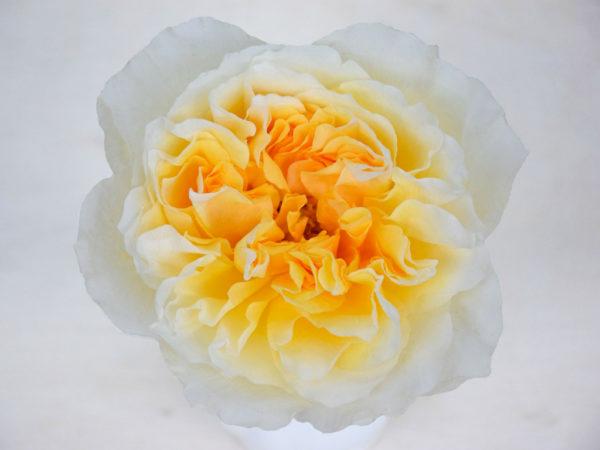 Online flower wholesaler