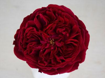Bloemengroothandel Parfum Flower Company