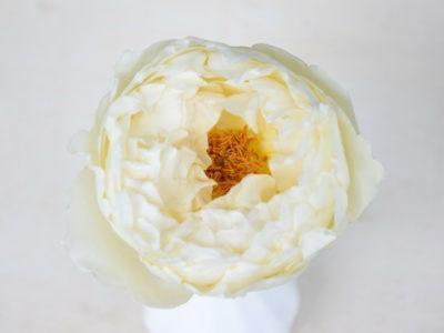 Bloemengroothandel Parfum Flower