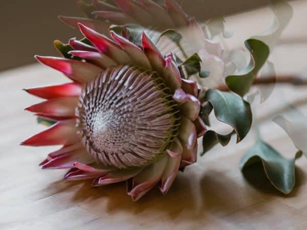 Günstigster Blumengroßhandel