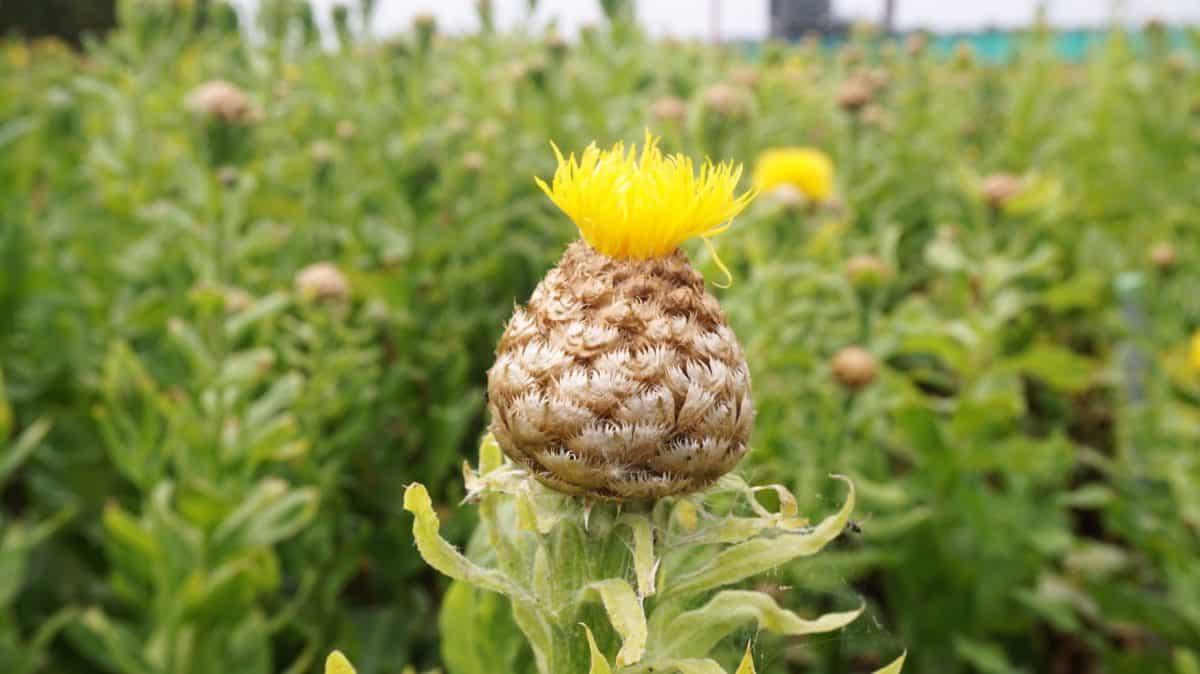 Biobloemen van Op Beemster Klei