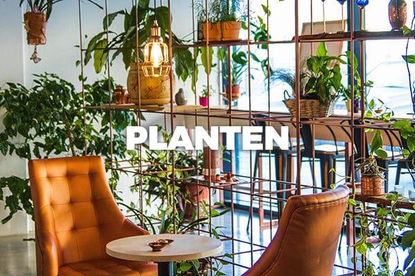 Ga naar Bloomer's plantenaanbod!