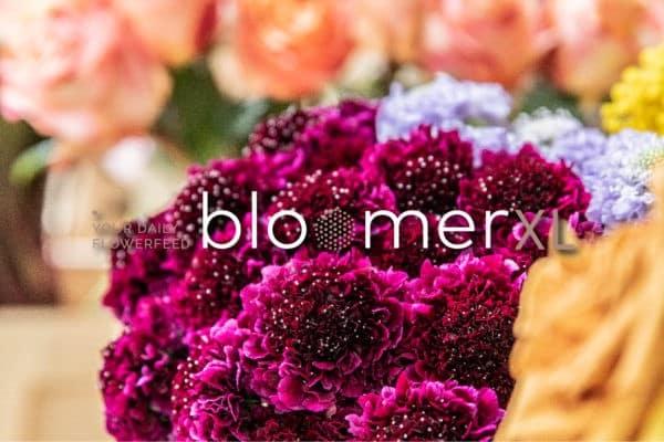Ga naar Bloomer XL, voor de scherpste prijs met Bloomer kwaliteit!