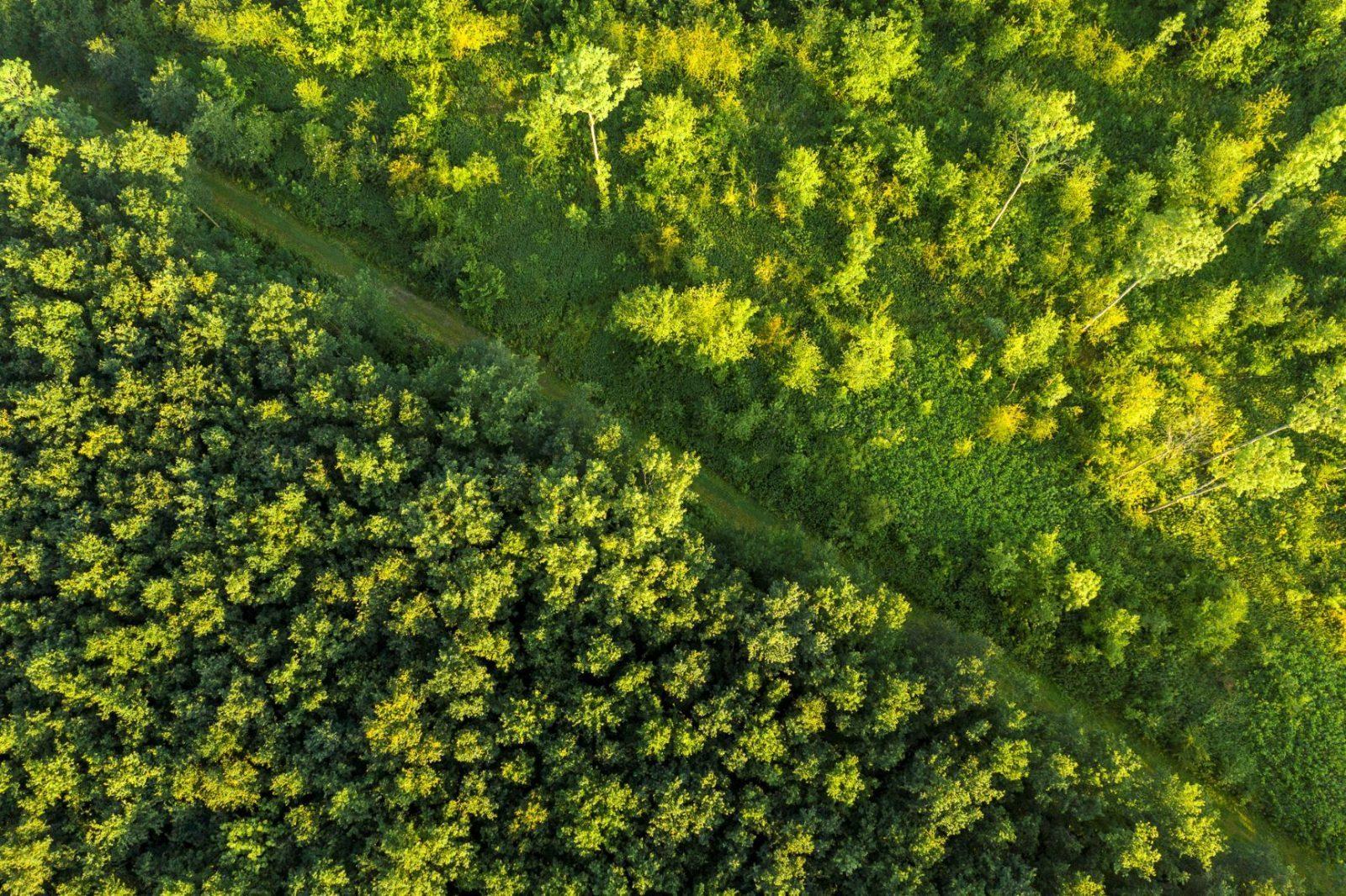 Waalse bos luchtfoto