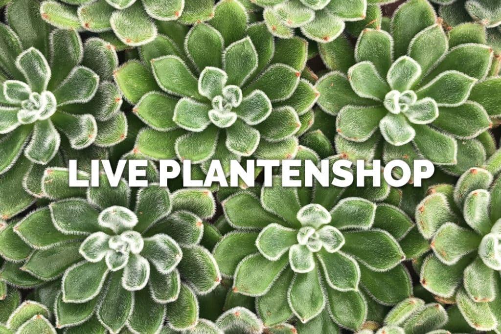 Ga naar Bloomer's live plantenshop!