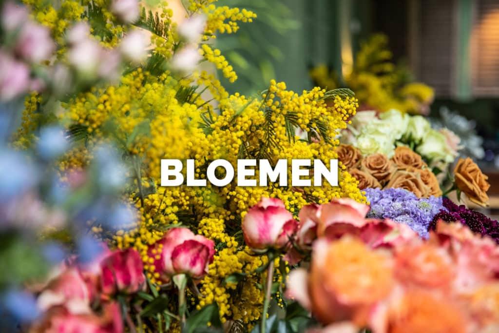 Ga naar Bloomer's actuele verse voorraad van bloemen!